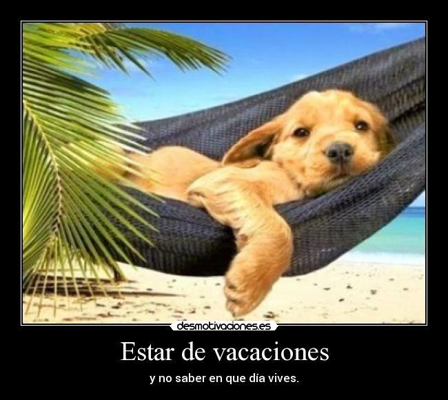 vacaciones verano desconectar